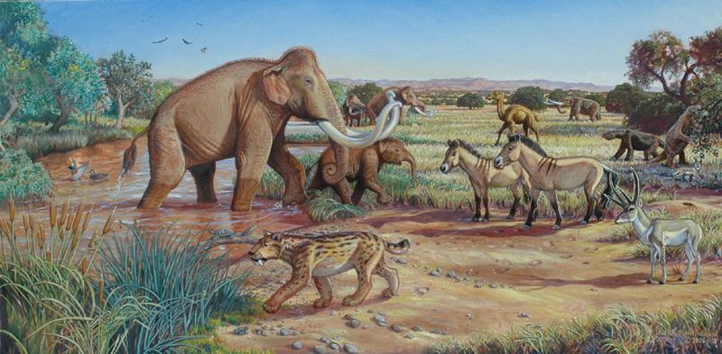 Children S Natural History Museum